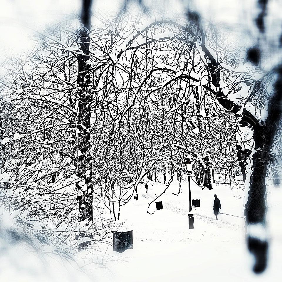 Vintermorgon i Humlegården