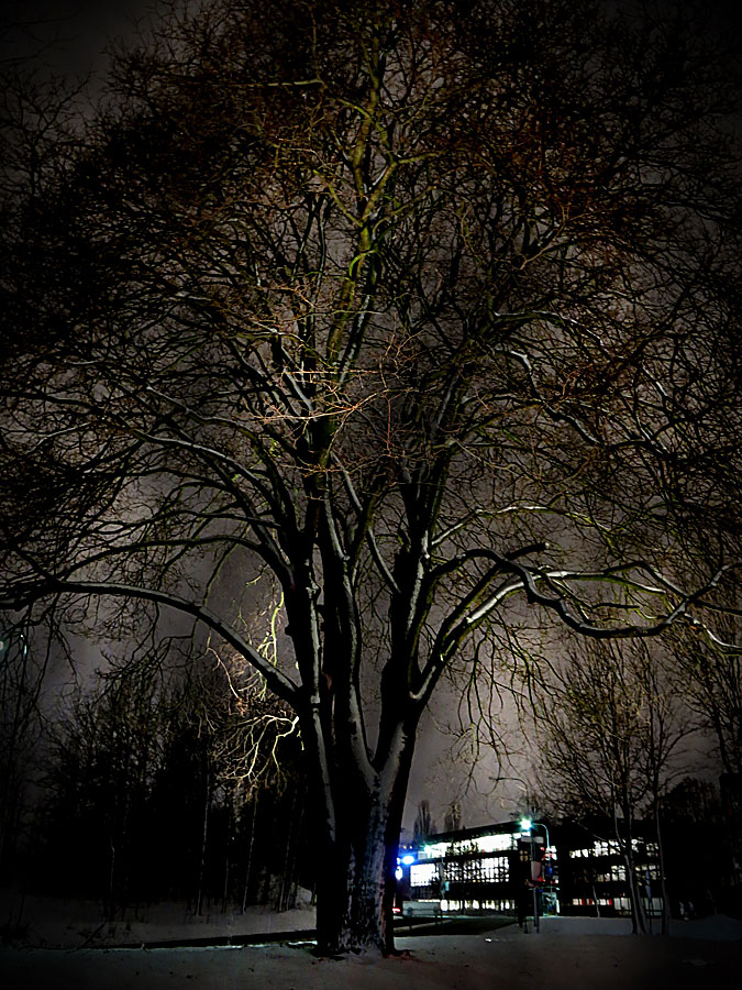 Vinterträd på Gärdet