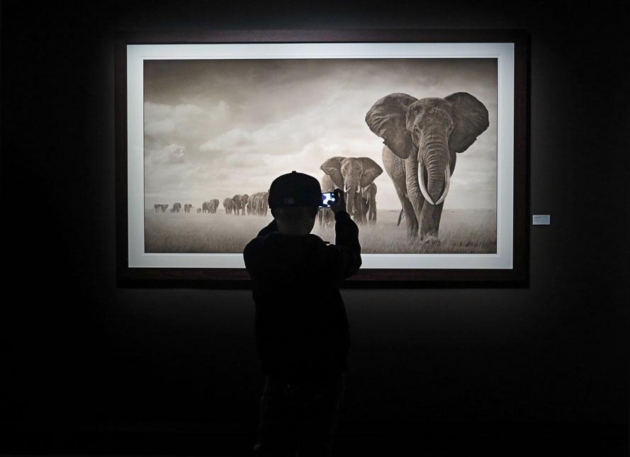 Nick Brandt, Fotografiska